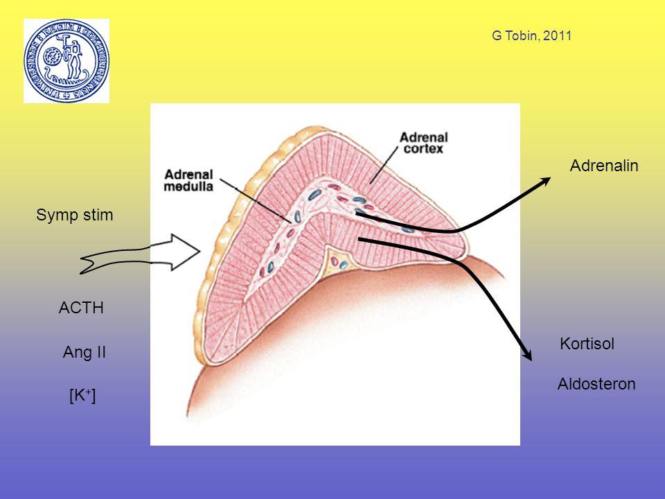 G Tobin, 2011 ACTH Symp stim Ang II [K+] Adrenalin Kortisol Aldosteron